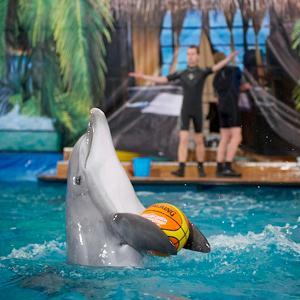 Дельфинарии, океанариумы Тайги