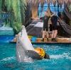 Дельфинарии, океанариумы в Тайге