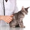Ветеринарные клиники в Тайге